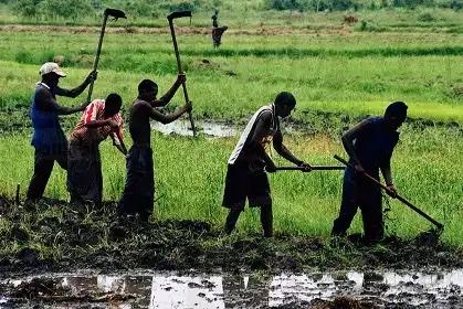 Retombées socio-économiques d'un projet agricole de 140 ha :  Wendou Bosséabé atteint l'autosuffisance alimentaire