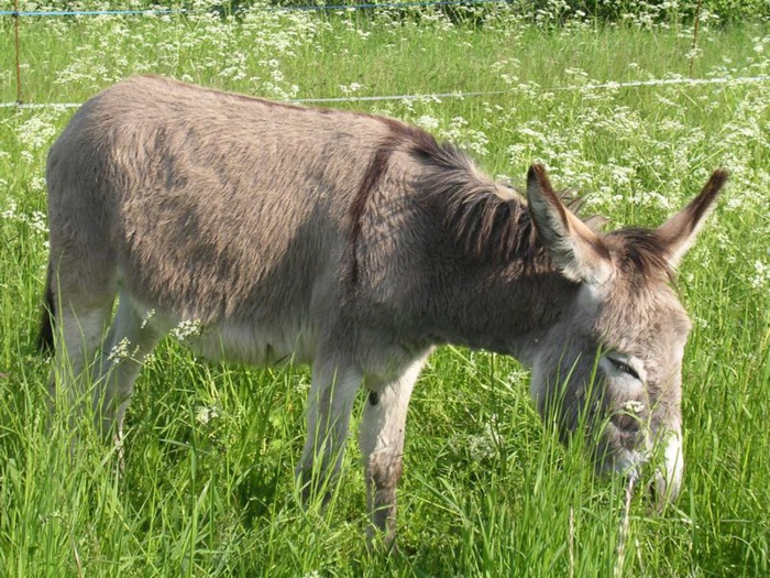 MBACKE : Un individu surpris en train de satisfaire sa libido sur un...âne