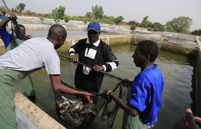 Kédougou, du poisson frais au DAC d'Itato