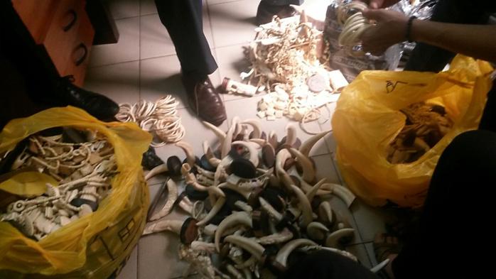 Trafic d'ivoire et justice sénégalaise : Une condamnation moins lourde que le poids de l'ivoire en Afrique