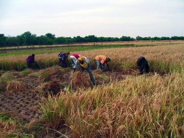 Sensibilisation des producteurs agricoles de Louga sur la qualité des engrais