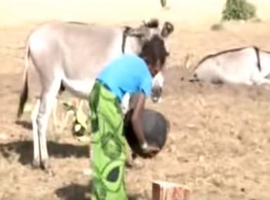 Commerce Illicite : Vingt tonnes de viande d'âne saisies