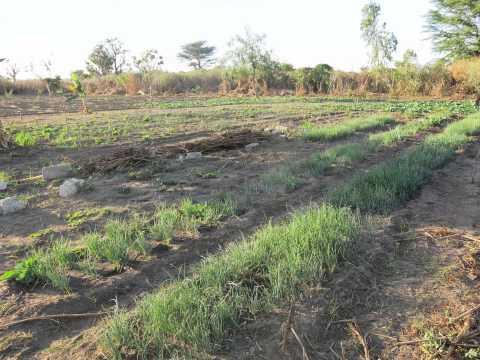 Doikoul-Ndiawrine/Kébémer : 12 milliards pour créer des fermes agricoles Natangué et générer à terme 30 000 emplois
