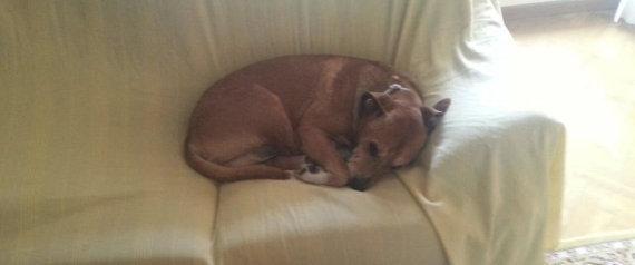 Zoophilie : Un ASP pris sur un chien