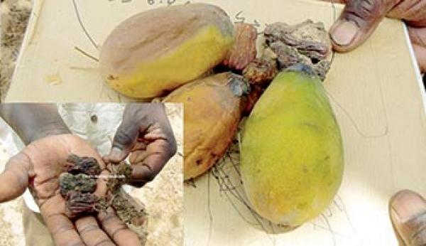 Exploitation du phosphate de Taïba : Les populations asphyxiées