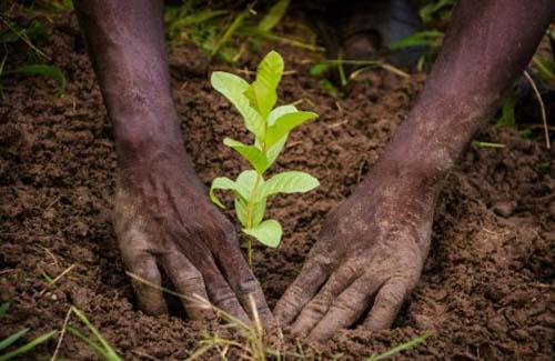 La journée de l'arbre célébrée le 7 août à Louga