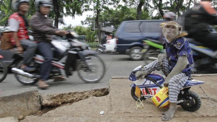 Trafic de drogue en Indonésie : Exécution des trois nigérians et d'un indonésien