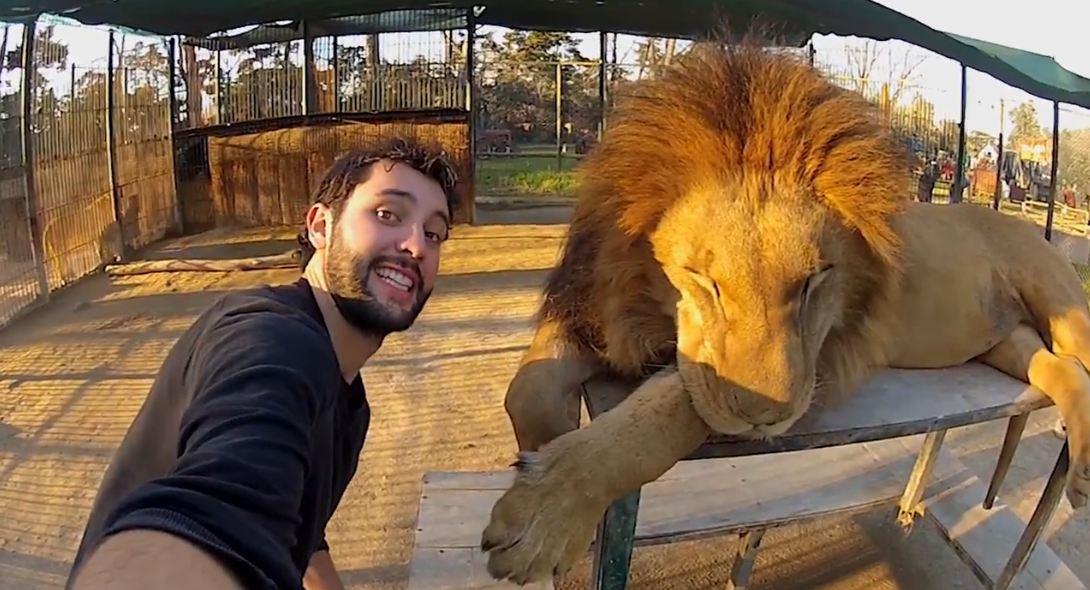 INDE : Une amende pour avoir posté des selfies avec des lions d'Asie