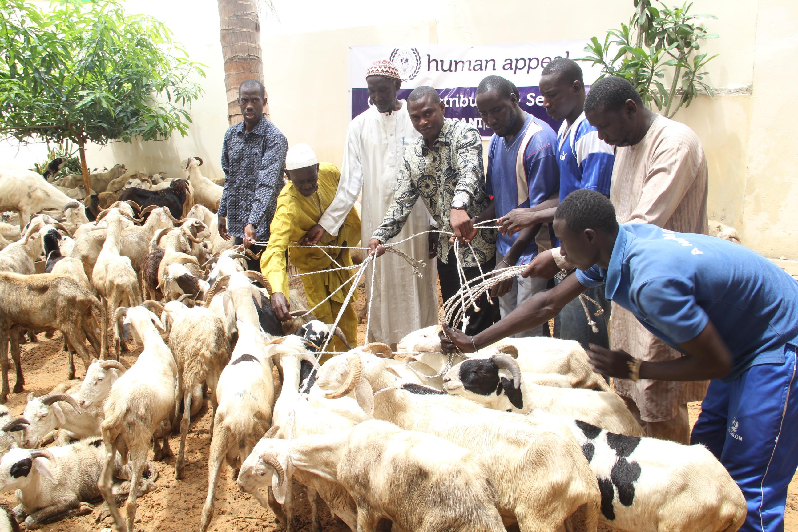 TABASKI : La Mauritanie va exporter 350 000 moutons au Sénégal