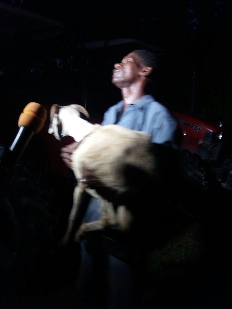 TABASKI 2016 - Rufisque sans mouton, Dakar à la peine