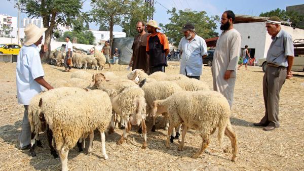 Beaucoup de Tunisiens renoncent à sacrifier un mouton pour l'Aïd