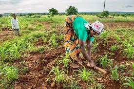 Gestion des données agricoles : des experts de 17 pays membre de la CEDEAO  formés