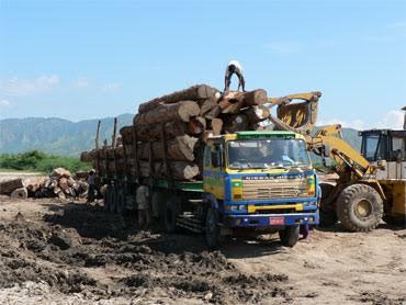 Fin d'accalmie : Reprise de la coupe de bois dans le Médina Yoro Foulah