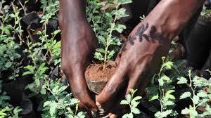 Journée de l'environnement : Une initiative « ceinture verte » lancée à Bargny