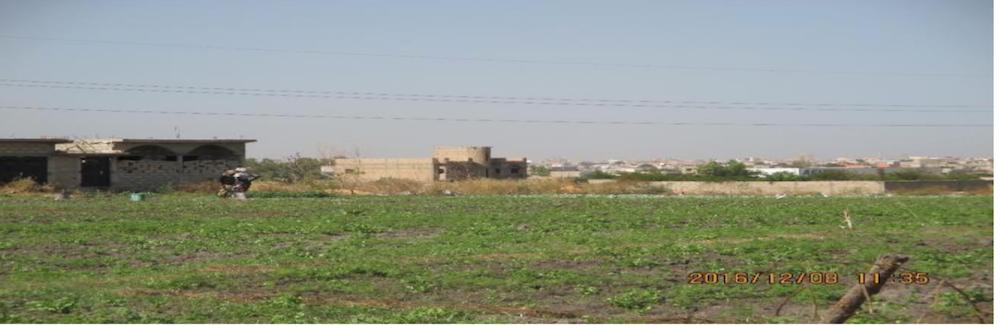 Disparition du « poumon vert » de Dakar : 600 ha de surface agricole perdue en dix ans dans la région de Dakar