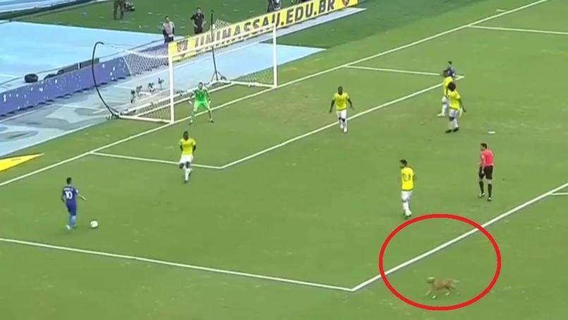 Un chien interrompt Neymar en plein match