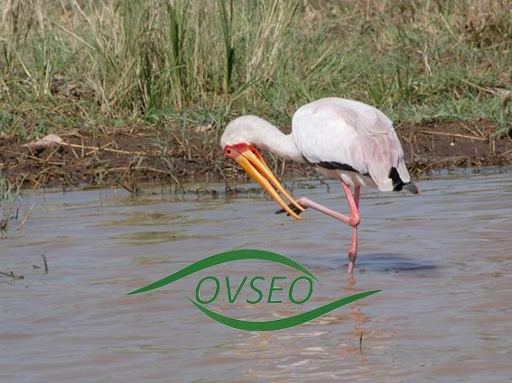 OVESEO organise un forum sur la gestion des eaux