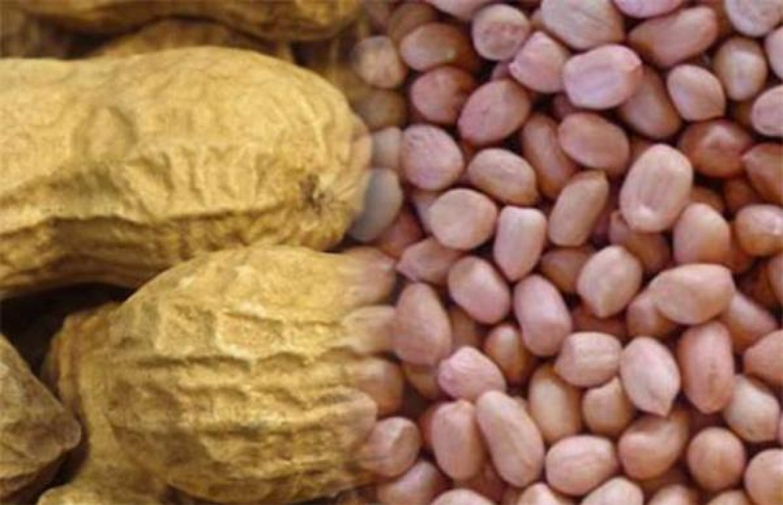 Instaurée en 2016 pour protéger le marché contre l'industrie chinoise, la taxe à l'exportation sur l'arachide suspendue