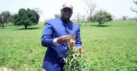 Suspension de la taxe à l'importation sur l'arachide : une conséquence de la dangereuse surproduction mondiale