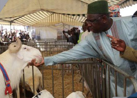 """KOLDA : Macky Sall réaffirme la volonté du gouvernement d'éradiquer """"au plus vite"""" le vol de bétail"""