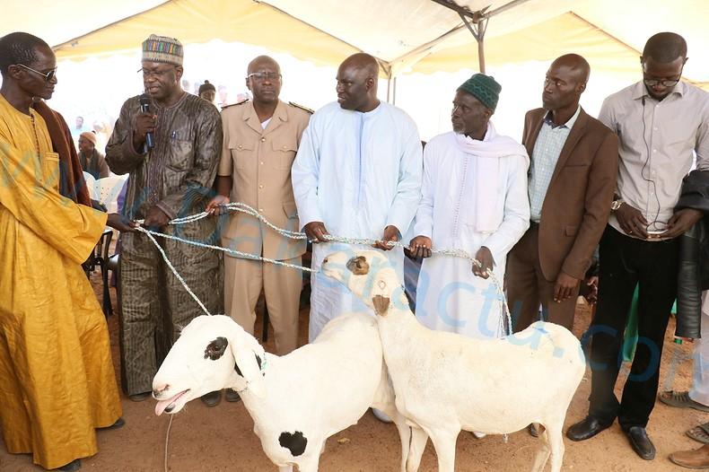 Autosuffisance en moutons : La Commune de Ngoundiane offre 150 moutons à des éleveurs