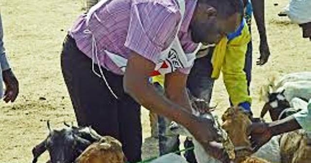 Plus de 200 bovins décimés : La fièvre aphteuse fait des ravages à Kolda