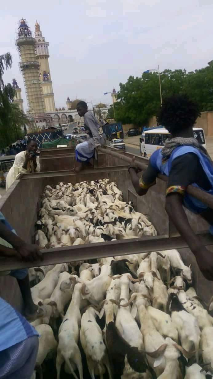 TABASKI À TOUBA- Le Khalife des Baay-Fall convoie 500 béliers dans le cour du Khalife Général des Mourides