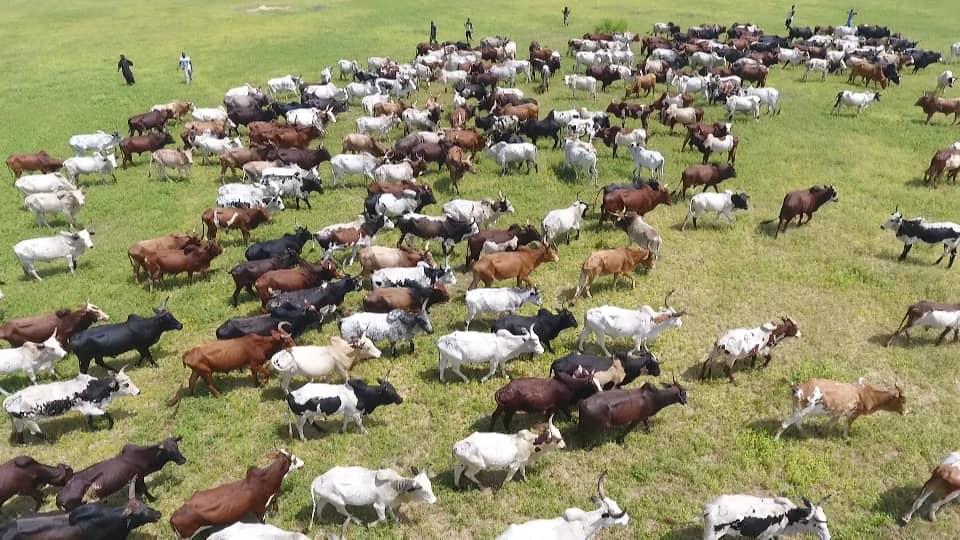 CHEIKH BÉTHIO À DIABEL : 'Je m'interdis de communiquer le nombre de bœufs que nous allons acheminer... Le thiant n'est pas du m'as-tu-vu! '