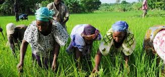 Journée Internationale de la femme rurale : la CEDEAO pour l'égalité des sexes