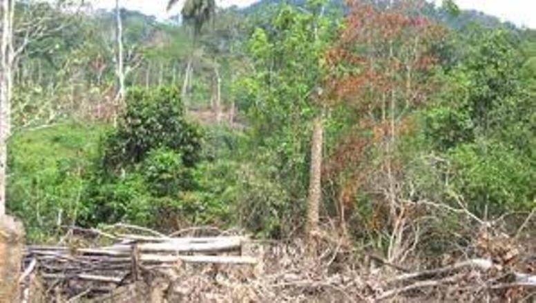 """Code forestier : Zappés lors de son élaboration, les exploitants de Ziguinchor """"brûlent"""" le document"""