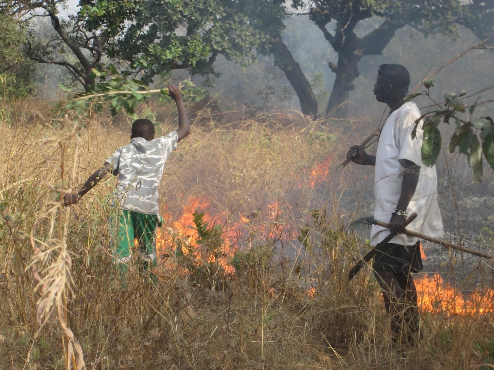 Feux de brousse : Une superficie totale de 5249 ha affectée dans les régions de Louga, Saint-Louis et Matam.