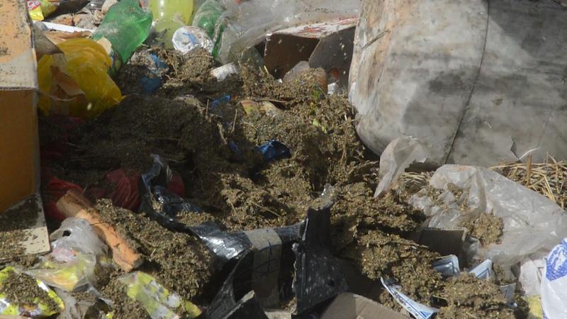 Joal : 229 kg de chanvre indien saisis entre Jeudi à hier Dimanche