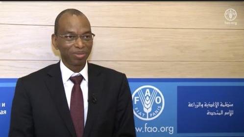 ROME : Le ministre de l'Agriculture Moussa Baldé reçu à la FAO.