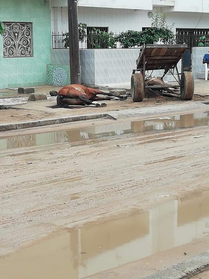 Comico 2 :  Deux chevaux tués par électrocution, un périmètre de sécurité inexistant