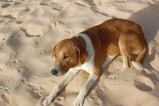 Nioro : Un chien errant tue un enfant de 3 ans.