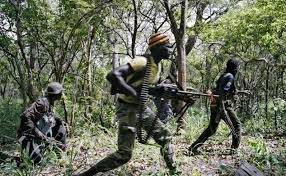 Casamance : Attaque inopinée de 4 individus armés à Saliotte