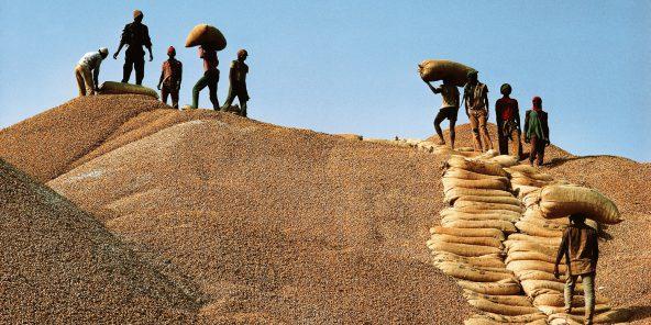 Bassin arachidier / Commercialisation de l'arachide : Les producteurs se frottent les mains en vendant le kg à 250 FCFA au détriment des huiliers.