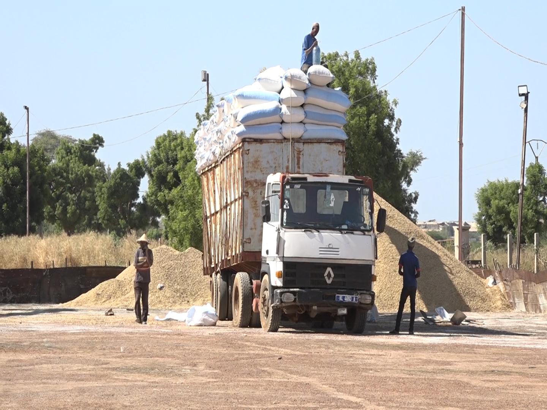 Nioro du Rip / Commercialisation de l'arachide : Les 53 points de collecte agréés par la Sonacos ne sont pas encore fonctionnels (commerce).
