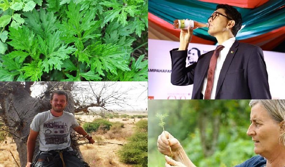 L'artémisia : Le combat d'une plante antipaludique proposée en rempart contre le COVID-19