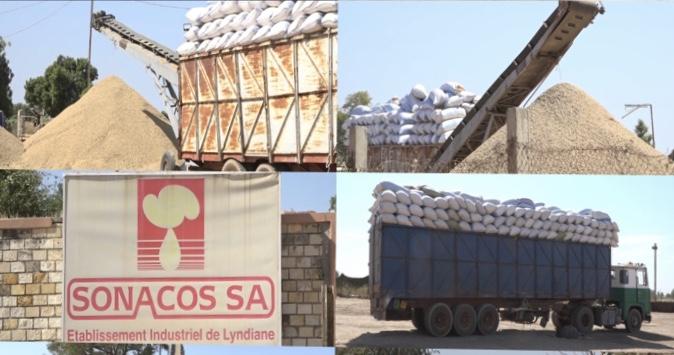 Exportation de graines par des chinois : Ce sont les graines d'arachides de la SONACOS.