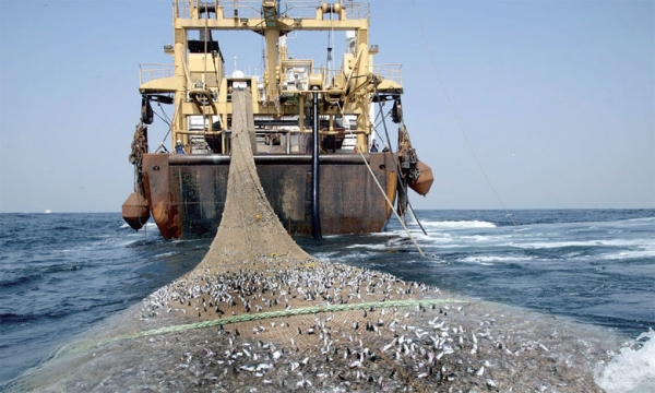 Secteur de la Pêche : Les acteurs interpellent le Président de la République