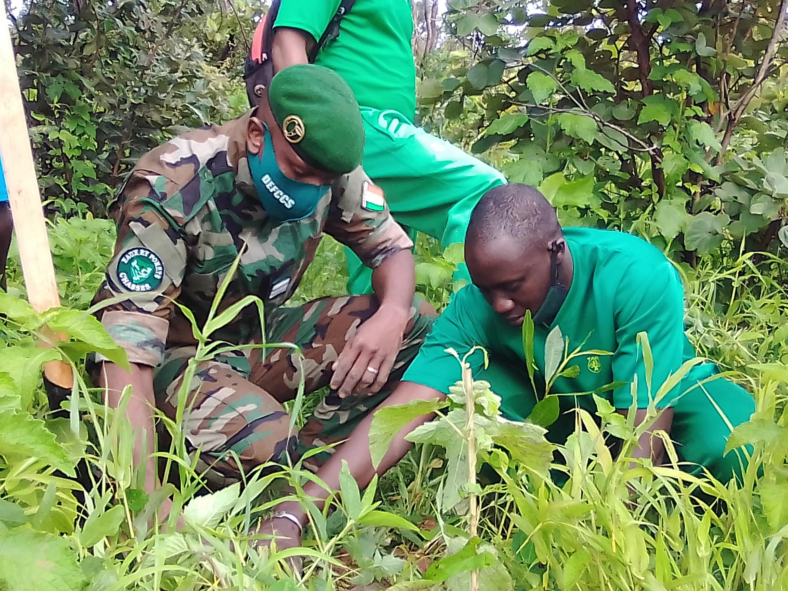 Reboisement à Kolda : 6 986 anacardiers plantés pour protéger l'environnement.
