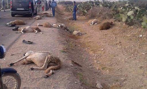 NGUITH À NDANGALMA / Un chauffard fauche et tue 8 moutons avant de s'enfuir, laissant derrière lui la plaque de son véhicule.