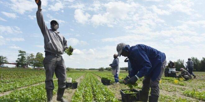 Le calvaire des sénégalais « esclaves » de leurs compatriotes en Italie.
