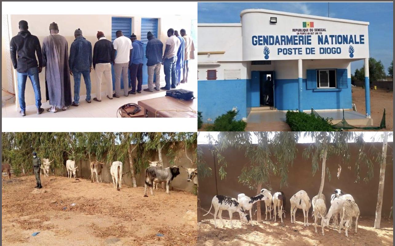 Diogo / Vol de bétail : 11 personnes arrêtées en possession de 18 bêtes.