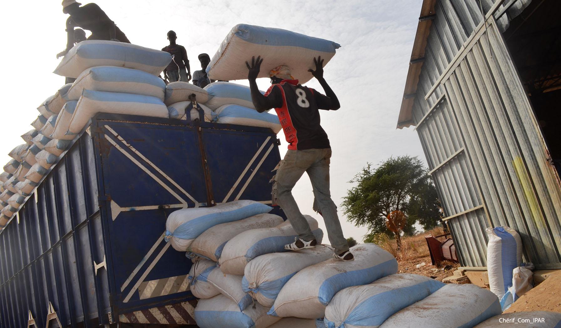 Commercialisation de l'arachide : Les fortes recommandations des acteurs de la filière.