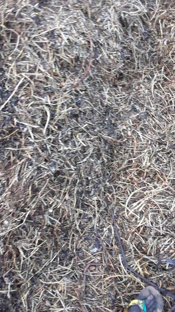 DROGUE À DIOURBEL / 45, 386 Kg de la variété verte saisis par les éléments de la BRS