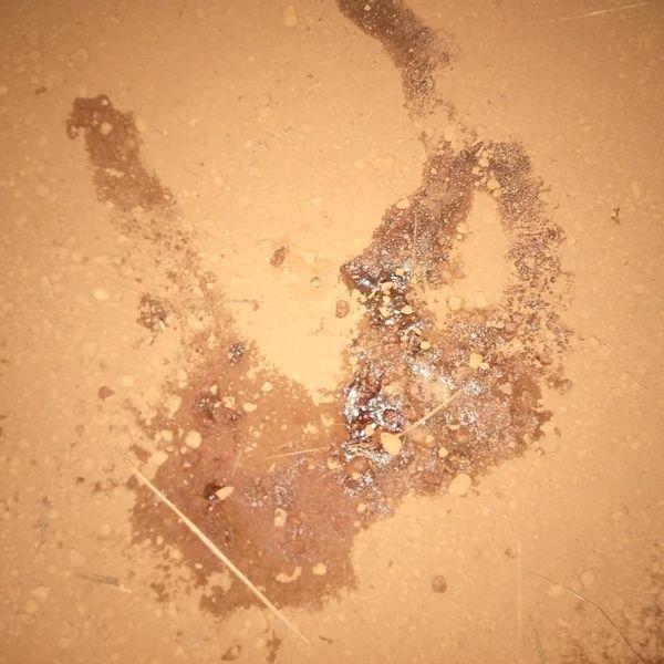 Drame à Kédougou: Une bataille rangée entre ados vire au drame.