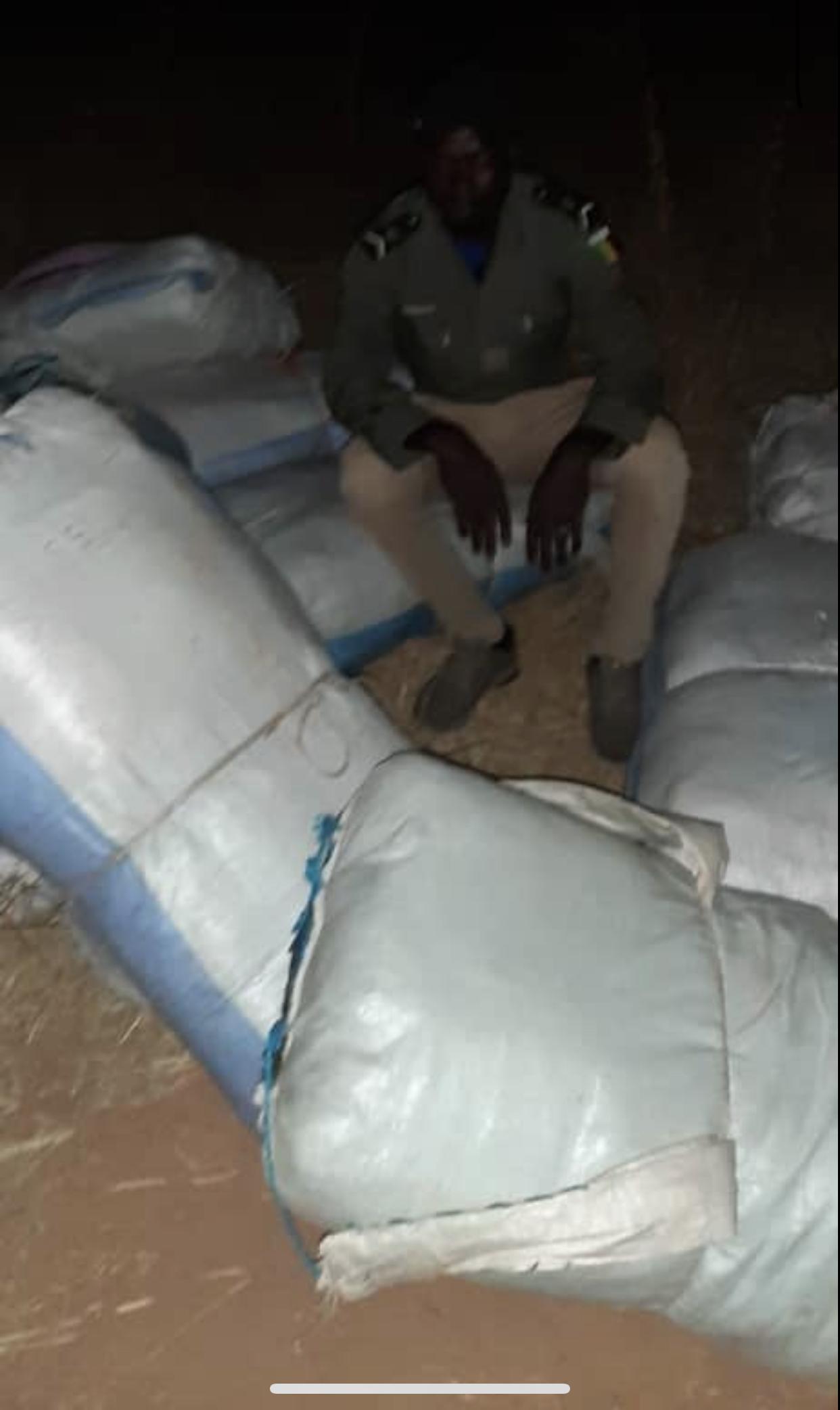 Trafic de drogue : 850 kg de chanvre indien saisis à Kaolack.