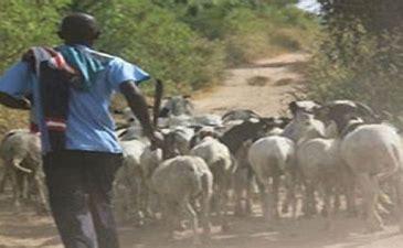 Vol de bétail à Palméo (Kébémer) : Quatre personnes arrêtées et une en cavale